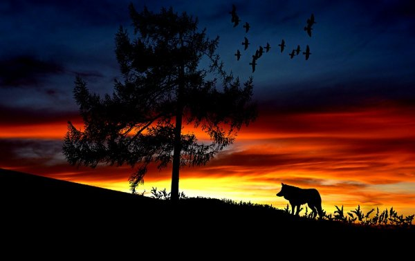 Paysage - Loups