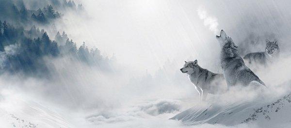 Paysage - Hiver - Loups