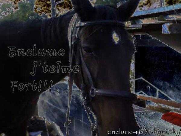 enclume mon amour de cheval