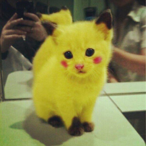 Pikachu le chat ce que j aime et autres - Image pikachu ...