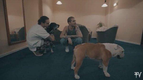 Tokio Hotel TV 2017 - Episode 11 – Pumba est de retour
