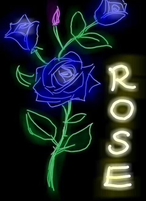 La rose violet