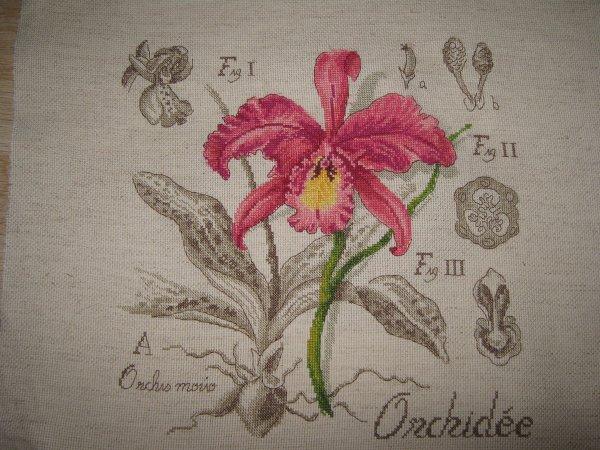 "etude botanique ""l'orchidee"""