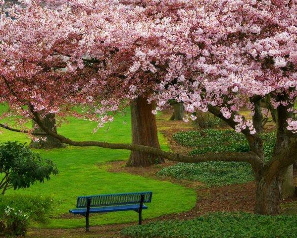 Belle image ............avec banc, j adore ce style de parc !!