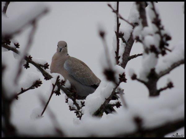 Dans la neige....