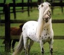 Photo de chevalove
