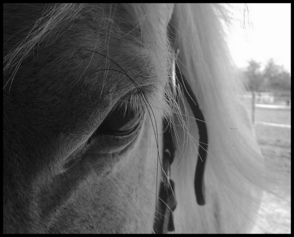 L'amour de ma vie tout simplement .il n'y a pas de mots pour expliquer ce que je ressent pour ce cheval, pour mon cheval ,ma vie , mon confident .Lui sans qui je ne peux plux vivre maintenant il fais parti de ma vie chaque secondes je pence à lui  chaque moment avec lui son magique;.... JE t'aime mon gros loulou d'amour