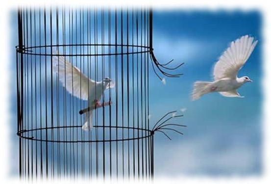 Titre du poème: Liberté envolé