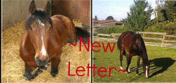 ~New Letter~
