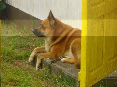 re mon chien