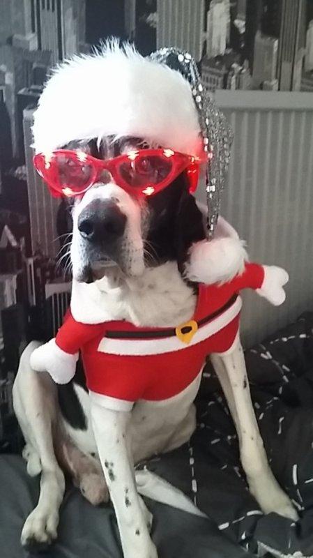 Charly vous souhaites un Joyeux Noël