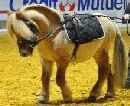 Salon du cheval 2012