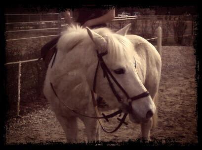 Quelque chevaux de mon club .