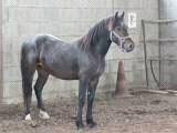 Quelque chevaux de mon club (suite2)
