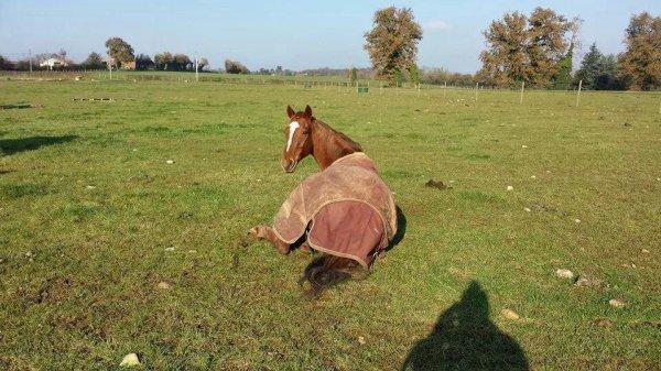 je sais que je ne poste plus boucoups mais j'ai plus vraiment le temps entre les cours et la gymnastique et le cheval voila bsx