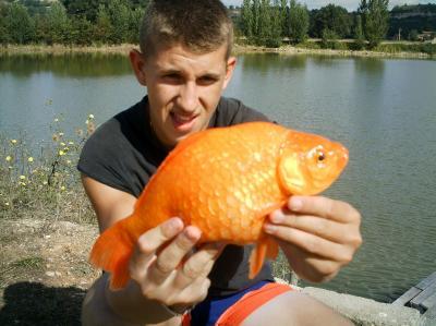 Carpe boule elite baits for Carpe koi orange