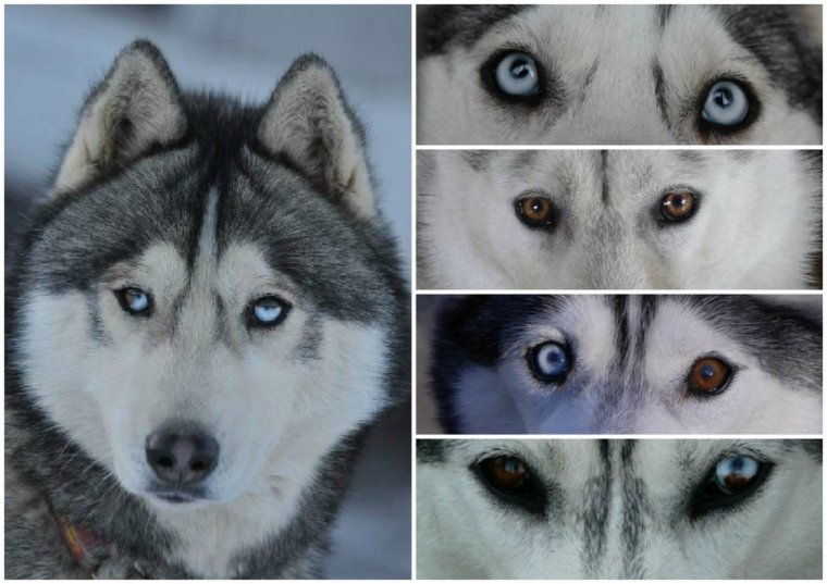 masque husky