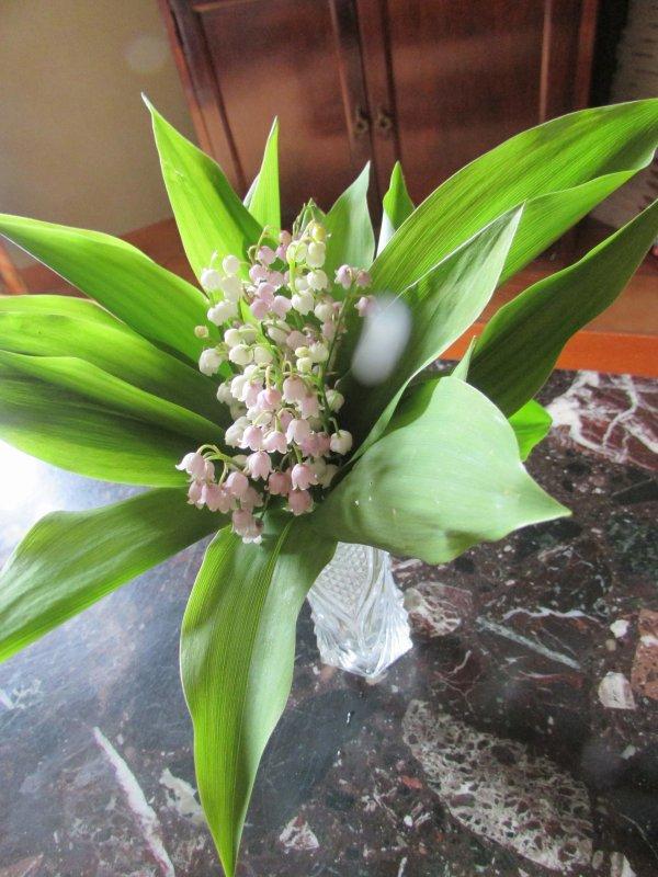 Mon bouquet du 1 er mai muguet du jardin
