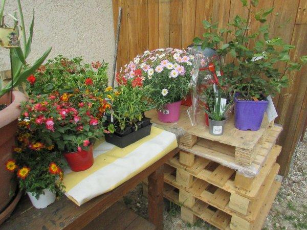 hier,achat de plantes à jardiland