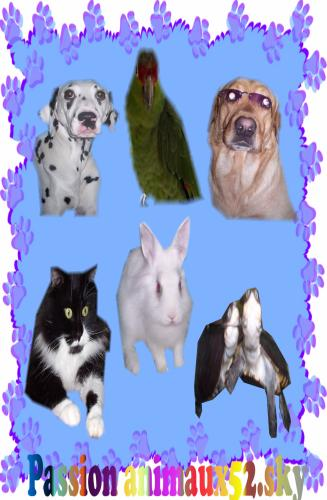 L'amour des animaux!!
