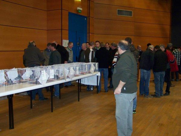 vente de pigeonneaux des internationales de caudry
