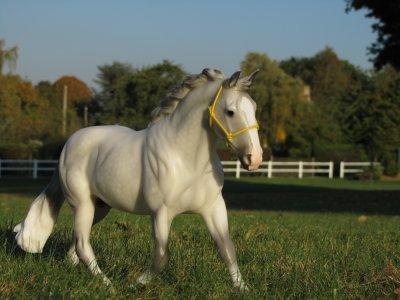 """"""" Les chevaux sont faits de la même matière que les rêves ... """" ♥"""