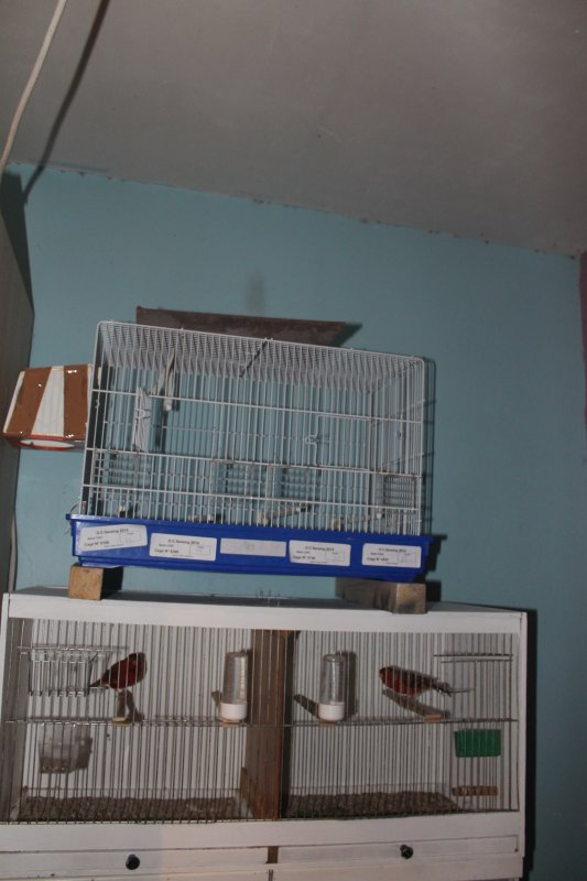 voila quelque photo je vais agrandir mon elvage oiseaux