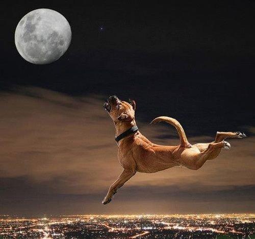 En vous souhaitant une bonne soirée et une paisible nuit !
