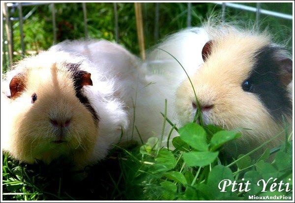 ... » Ptit Yeti « On reconnait le niveau d'évolution d'un peuple à la manière dont il traite ses animaux » ...