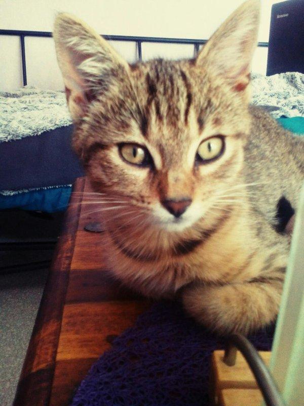 Mon deuxième chat Weedo mon deuxième bonheur