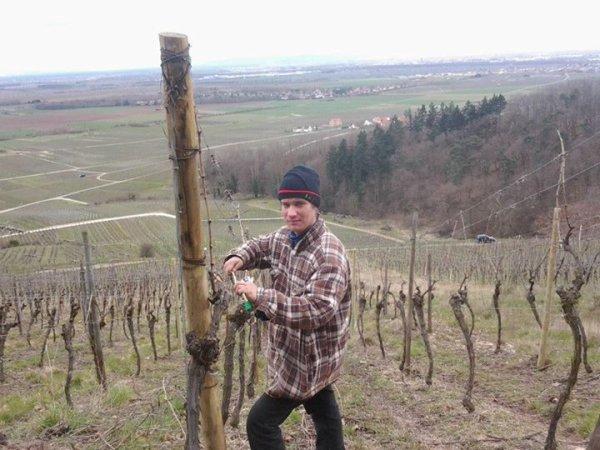 ma passion ces la viticulture