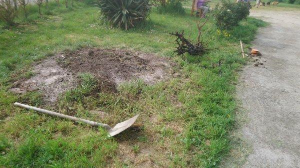 troisième arbuste arracher avec un treuille et mon camion