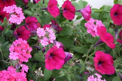 Fleurs aimant le plein soleil - Plante qui aime le soleil ...