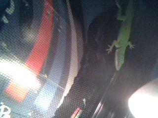 meais reptil jer un dragon d eau et un anolice
