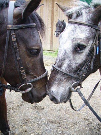 L'équitation une grande passion !