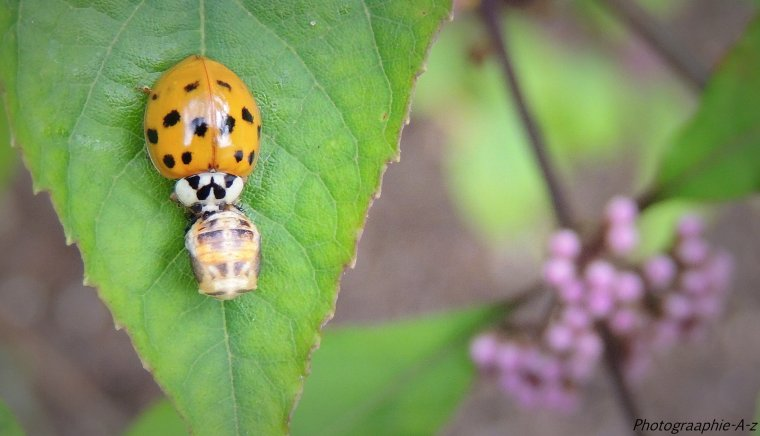 « Les insectes sont des invertébrés de l'embranchement des articulés. Il n'y a pas de quoi se vanter. »