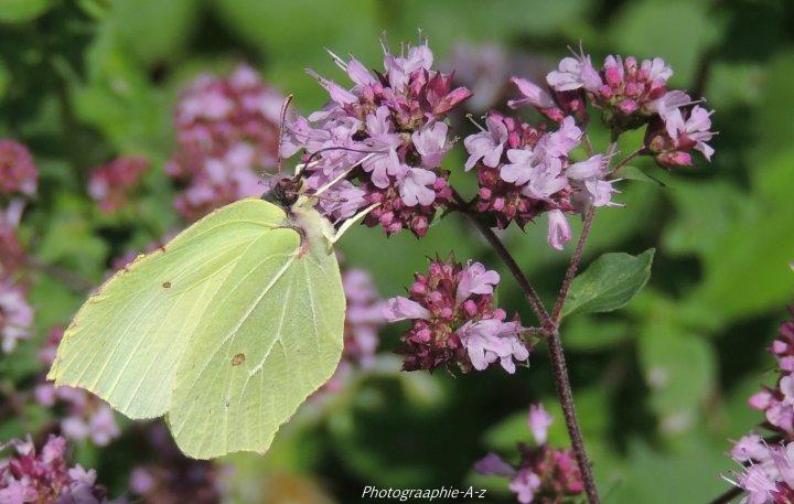 « Le plus beau papillon n'est qu'une chenille habillée. »