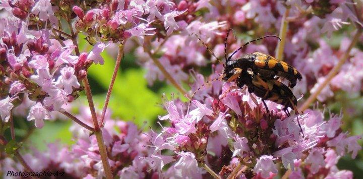 « Même parmi les insectes au chant, il en est d'habiles d'autres, non ! »
