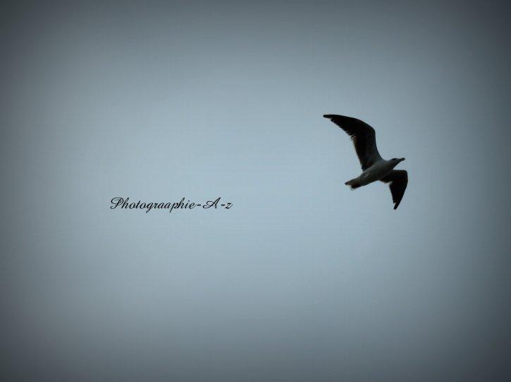 « L'oiseau qui vole n'a pas de maître. »