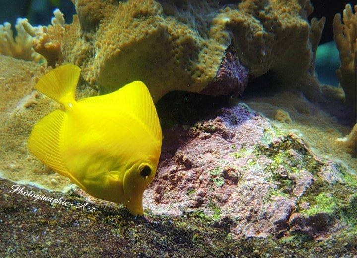 « Quand les gros poissons se battent, les crevettes doivent se tenir tranquilles. »