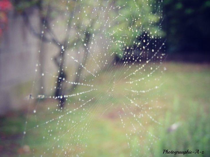 « Quelques gouttes de rosée sur une toile d'araignée, et voilà une rivière de diamants. »