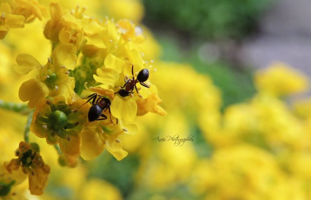 « Rien ne résiste à un acharnement de fourmi. »