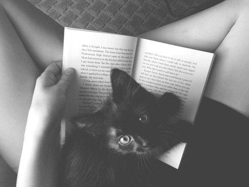 Le bonheur c'est trés simple les amis. Il suffit d'un café - mais pas trop parce que aprés on fait des bons de trois mètres - un chat - pour se lover sur vos genoux et vous prouver comme il vous aime - et un livre. Un bon livre. Un de ceux qu'on relirais des centaines de fois sans s'arrêter. C'est ça le bonheur.