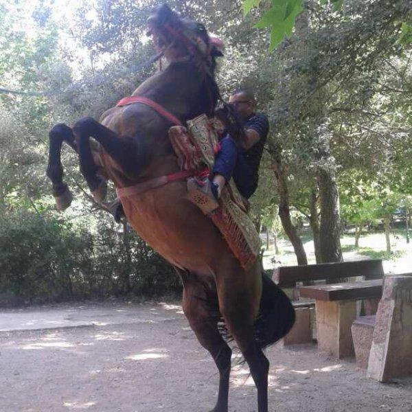 j'ai touché le cheval par l'épiron