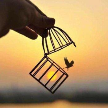 ... Libre ...