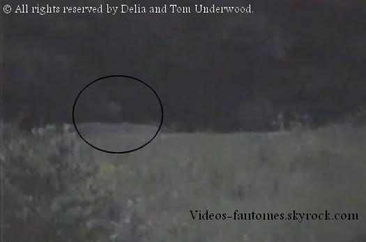 Danse macabre Durée : 54 sec Lieu : Triangle field, Gettysburg, États-Unis Année : Novembre 2001 Type : Amateur