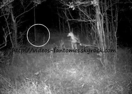 La biche et le fantôme Durée : 06 sec Lieu : -  Année :  2010 Type : Amateur