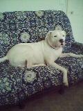 mon dog argentin