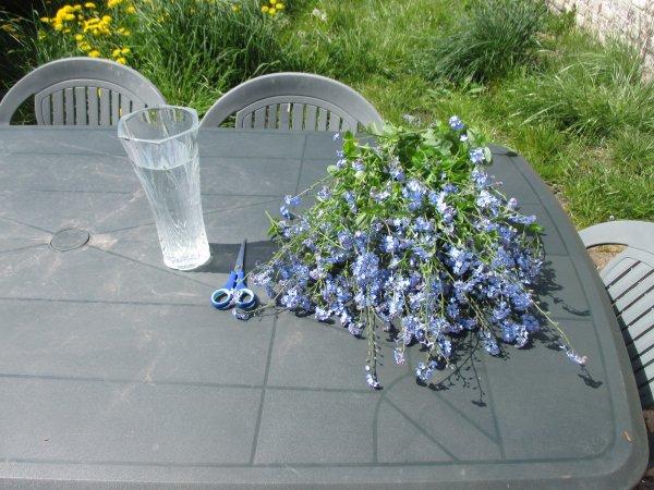 bouquet de mon jardin ^^