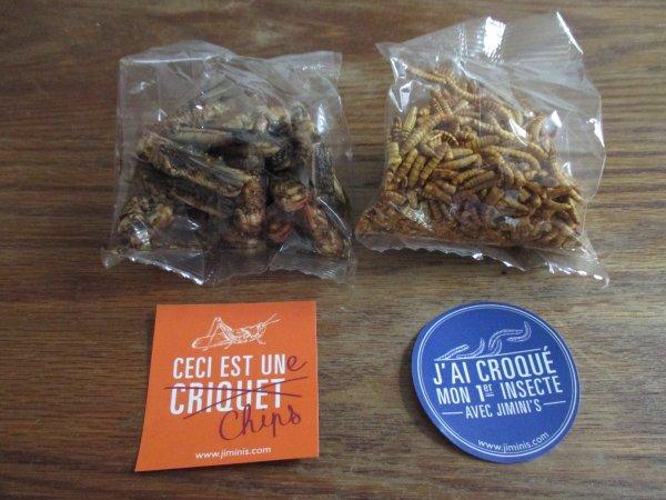 #Lille #insectes #miam